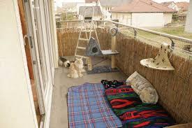 katzenschutz balkon der sichere balkon