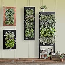 indoor herb garden wall indoor herb garden wall with indoor herb