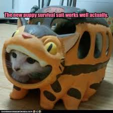 Cat Suit Meme - lolcats survival suit lol at funny cat memes funny cat
