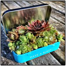 5 things to know for container garden success tin boxes gardens