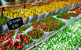 visit the floating flower market in amsterdam holland com