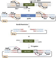 goldenbraid 2 0 a comprehensive dna assembly framework for plant