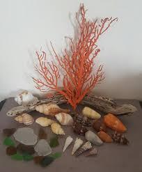 where to buy seashells sea shells sea grass from jeffreys bay cleaned handpicked