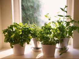 best grow lights for herbs miraclegro aerogarden extra best 25