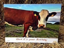 Cow Birthday Card Birthday Cow Irish Country Cards