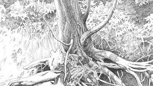 beautiful sketches of nature pencil drawing collection