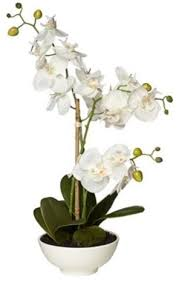 silk orchids white silk orchid flower in pot contemporary indoor