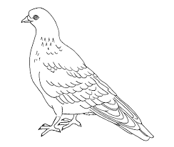 pigeon birds coloring sheet printable free coloring book picture