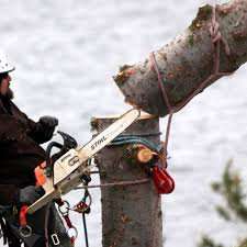 tree climbing terms and equipment glossary