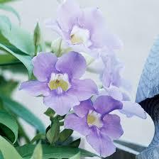 Blue Flower Vine - sky vine