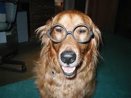 national service dog eye examination month petmeds pet health blog