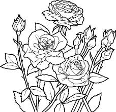 coloring pages with roses roses coloring pages printable coloring pages rose flower coloring