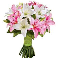 lilies flower pink white lilies flower faster
