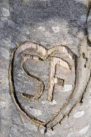Initials Carved In Tree Heart Carved In Bark Of Tree With Initials S And F Photograph By