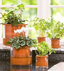 home interior plants versatile indoor plants for decoration decoration ideas