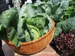 growing a fall vegetable garden in the big city garden trends