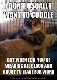 Funny Cat Lady Memes - pin by aaliyah trainer on cats pinterest cat crazy cat lady