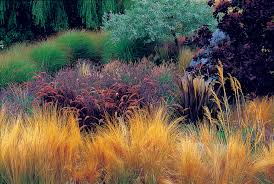 great garden with decorative grasses