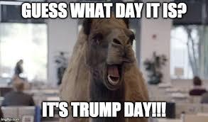 Hump Day Meme - hump day camel memes imgflip