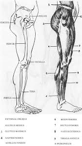 best 25 human leg ideas on pinterest figure drawing reference