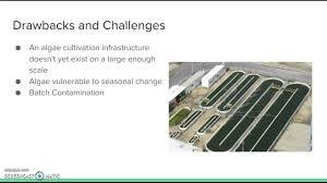 algae biodiesel economic feasibility youtube