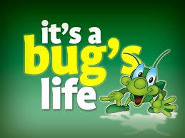 u0027s bug u0027s ministry127