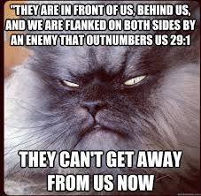 Colonel Meow Memes - insanity wolf more like my little bitch colonel meow quickmeme