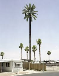 that s no tree it s a mobile phone mast and design the