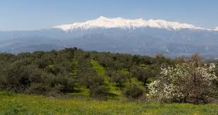 mountain backdrop valley of olive trees with mountain backdrop on canvas spartan