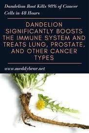 Dandelion Facts The 25 Best Dandelion Health Benefits Ideas On Pinterest
