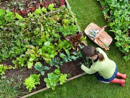 backyard vegetable garden ideas 14 amusing backyard vegetable