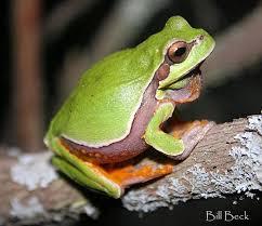 Decorative Frogs Gloria Repp Meet The Frogs