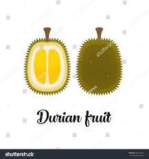 editable fruit vector editable durian fruit stock vector 487653040