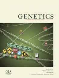 stress pattern sperm adalah y not a dead end epistatic interactions between y linked regulatory