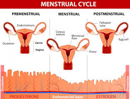 Light Bleeding Before Period What Is Menstrual Spotting With Pictures