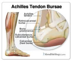 Foot Ligament Anatomy Aidmyachilles Com Anatomy And Fuction Of The Achilles Tendon