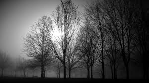 black and white foggy trees in a cold evening in venaria r flickr