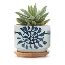 indoor succulent planter amazon com