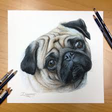 dog color pencil drawing here is the first commission that i just