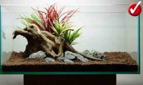 Aquascape Environmental How To Aquascape A Freshwater Aquarium For Beginners