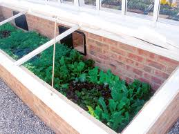 winter vegetable garden growing guide hgtv
