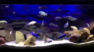 fluval eco bright led system lake malawi african cichlid