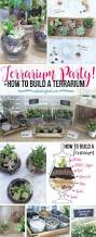 How To Make A Moss Wall by Best 25 Indoor Mini Garden Ideas On Pinterest Terrarium Making