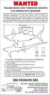 large pelagics tag recapture reporting swfsc