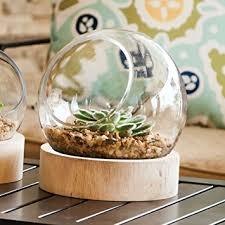 amazon com large glass globe terrarium with wood base grocery