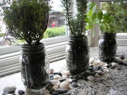 best indoor herb plants