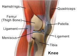 Knee Bony Anatomy Homepage Big Slide Anatomy Note