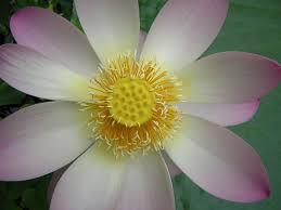 Tropical Rainforest Plant Species List - tropical rainforest plants here in the plants u0026 people house