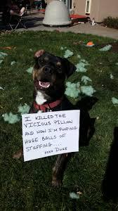 Dog Shaming Meme - 20151026 115520 e1525800532956 jpg