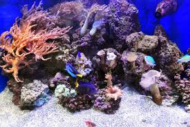 Reef Aquascape Designs Aquascaping Live Rocks In Your Saltwater Aquarium
